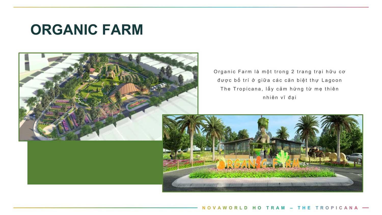 Tiện ích Tropicana Oranic Farm
